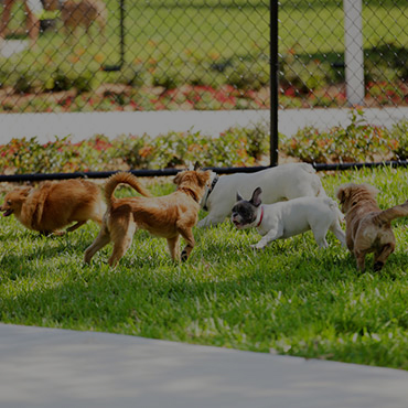 Large Dog Park at Targhee Place Apartments